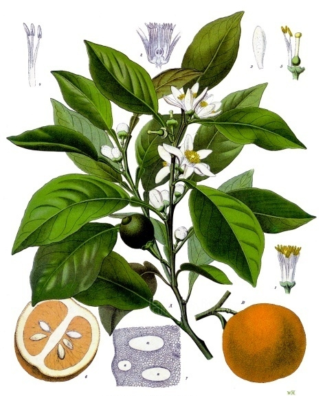Применение бергамотового масла базируется на его спазмолитических, жаропонижающих, антисептических, противогрибковых, иммуностимулирующих и антидепрессивных свойствах. Часто в ароматерапии его применяют и как обезболивающее средство в комплексной терапии.