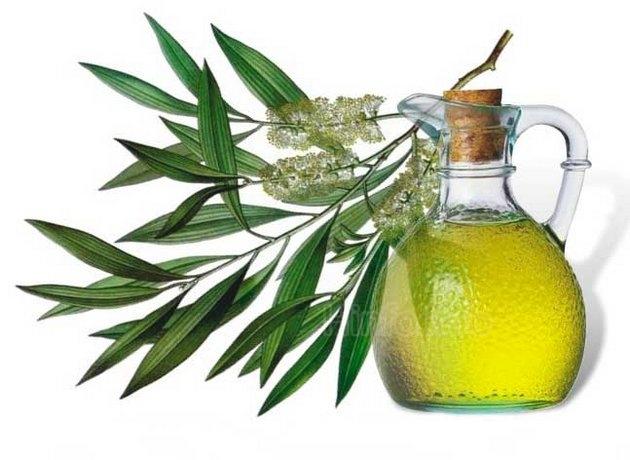 chaynoederevo.jpg - Наиболее эффективными антибактериальными компонентами этого масла являются терпинен-4-ол, a-пинен, линалоол и a-терпинеол.