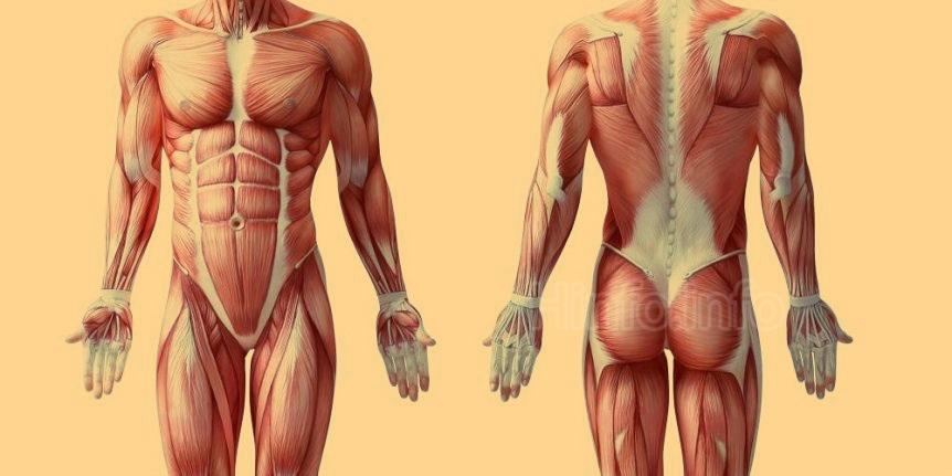 Использование сауны и бани помогает  наращивать мышцы, повышать выносливость и увеличивать силу.