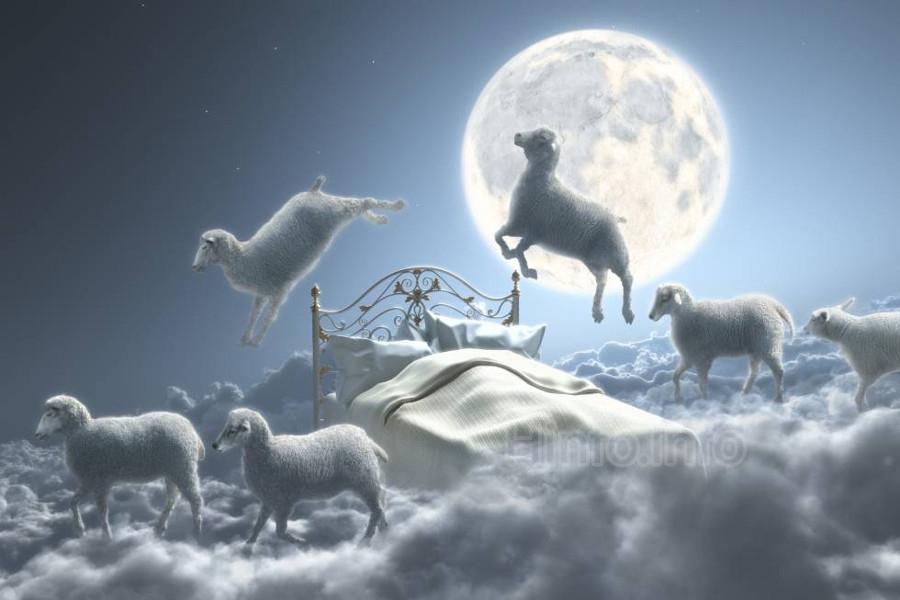 Не спи, считай овечек.