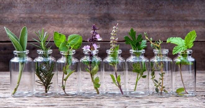 ТОП 5 ароматов для сауны: Эвкалипт, Сосна, Береза, Цитрусовые, Мята перечная.