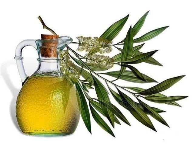 Лечебные свойства эфирного масла эвкалипта.