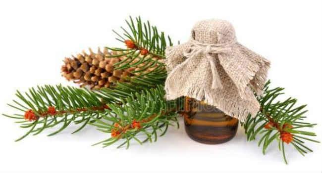 Эфирное масло сосны помогает при респираторных заболеваниях