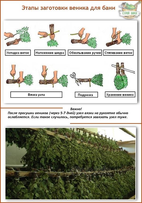 Как правильно вязать дубовые и березовые веники для бани.